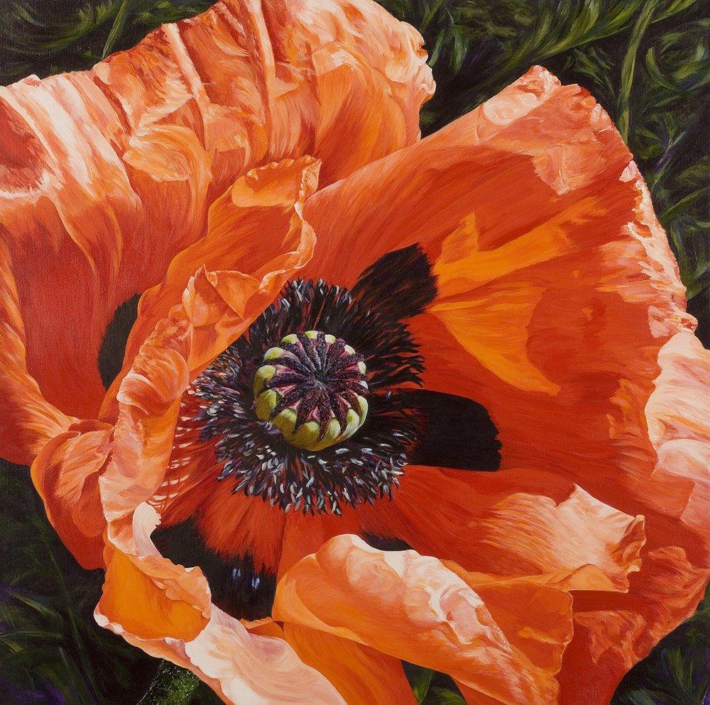 Charlie Morley  Poppy in sunlight  Acrylic on canvas, 61 x 61 x 4 cm