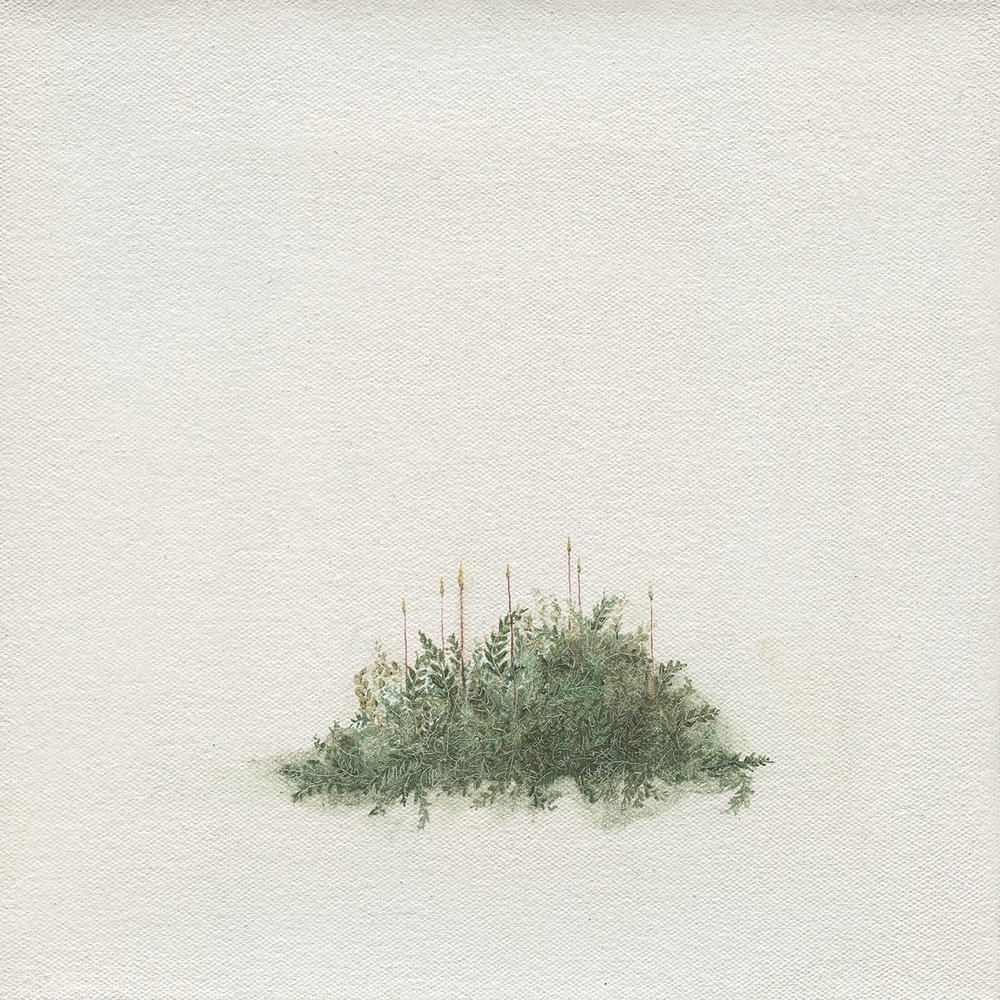 Louise Lacaille  Seven Sporophytes  Oil on canvas, 20.5 x 20.5 x 1.8 cm
