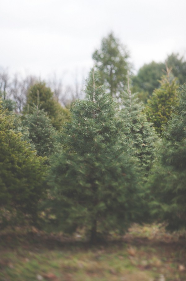 christmas themed engagement session