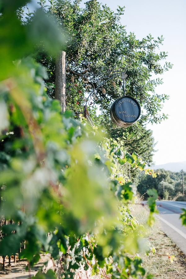 cretan-vineyard-wedding-in-chania