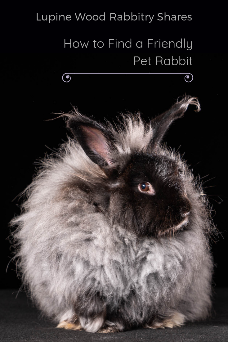 Friendly Pet Rabbit.png