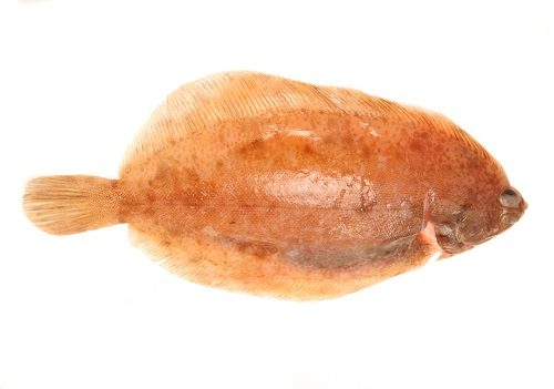 Lemon Sole.jpg
