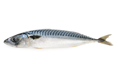 Mackerel.jpg