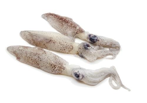 Baby Squid.jpg