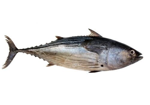 Tuna.jpg