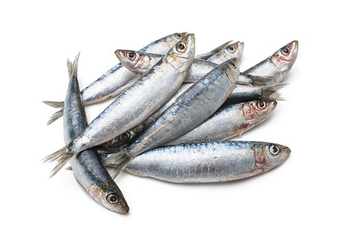Pilchards.jpg