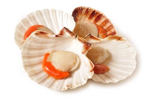 Scallops in Shell.jpg