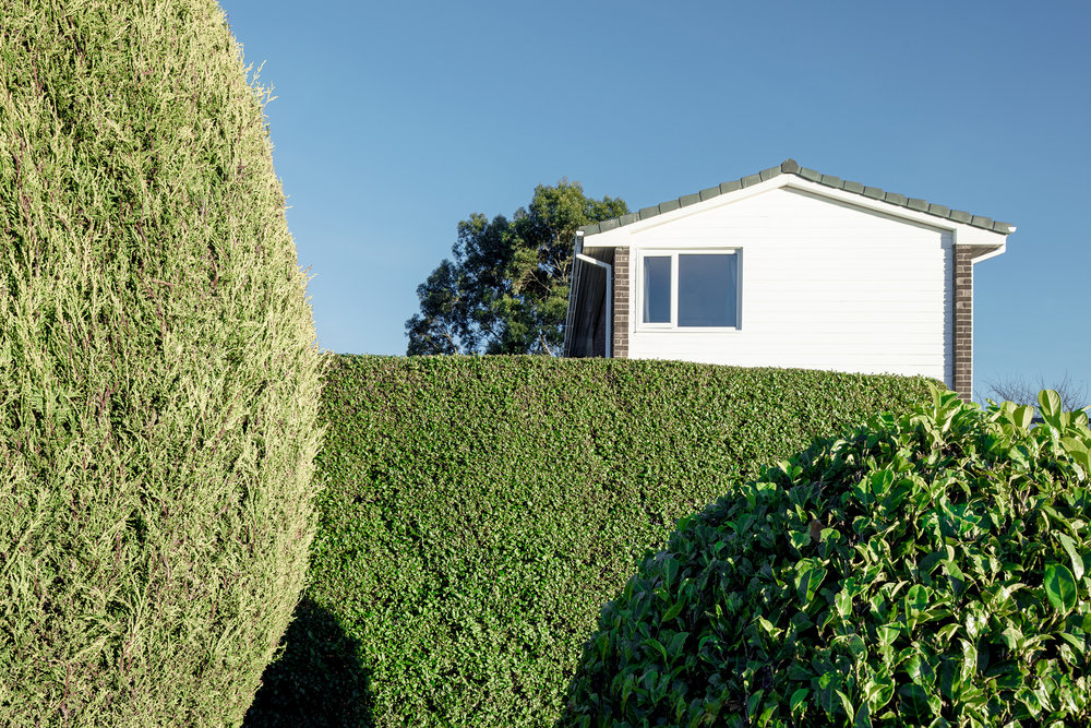 Hedges in Gateshead, Birtley