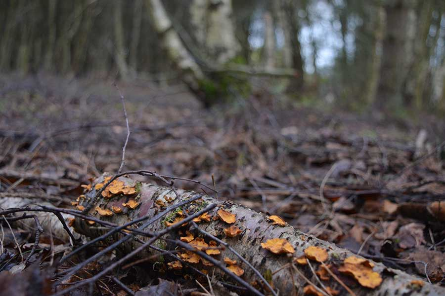 sherwood_forest