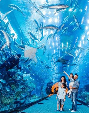 dubai-aquarium.png
