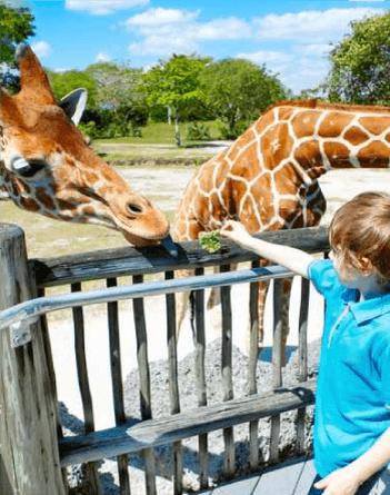 dubai-zoo.png
