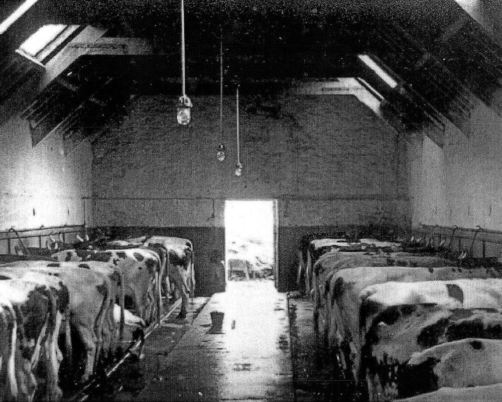 Dairy2s54.jpg