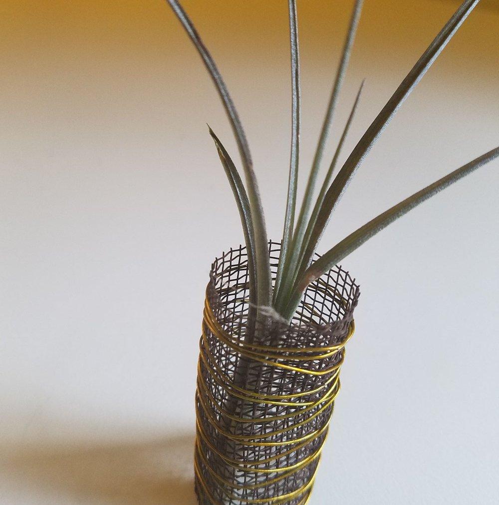 small plant.jpg