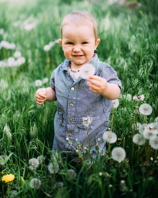 Just a little dude and his dandelions. Can't get enough of cutie Rhodes in his jumper 🌼