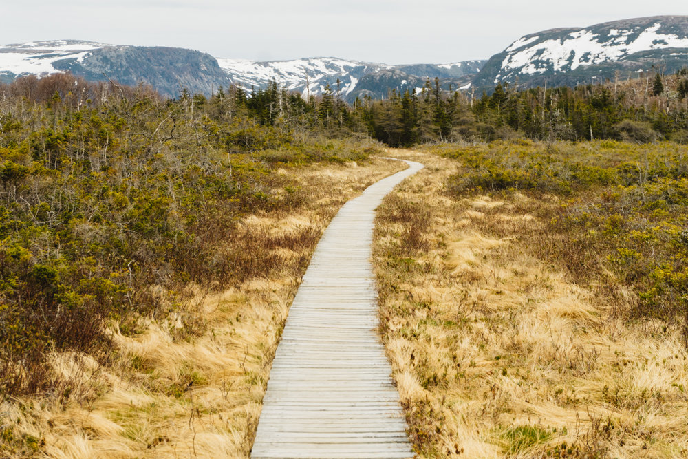 Gros Morne Path