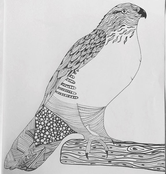 (A recent drawing I did of a hawk)