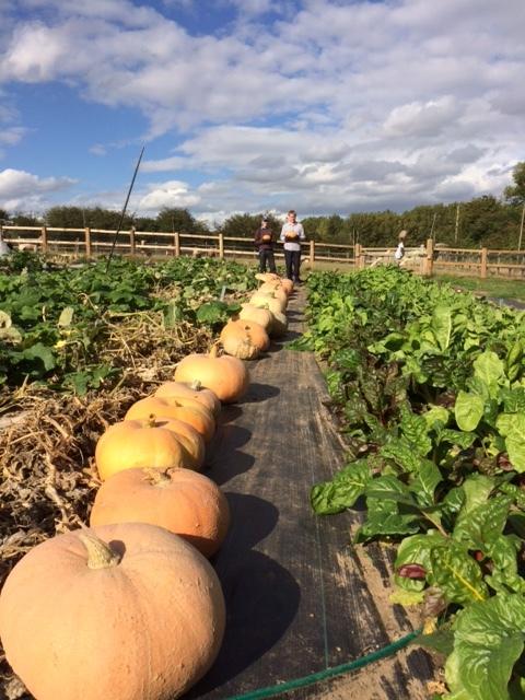Farm Halloween Pumpkins