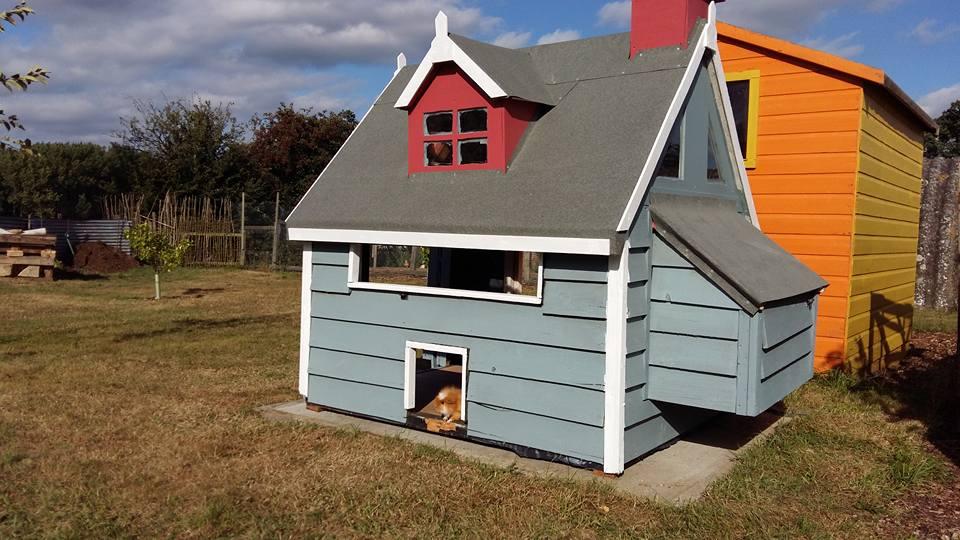 guinea pig palace.jpg