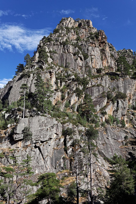 Granite et pins, vallée de la Restonica