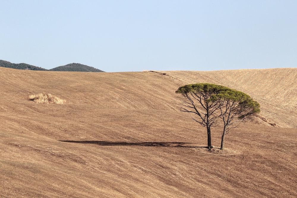 tuscania2.jpg