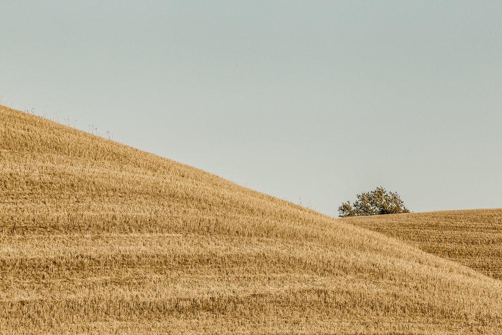 tuscania10.jpg