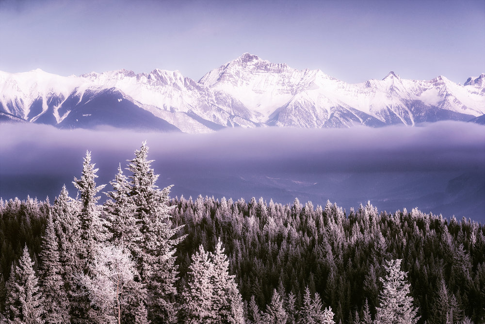 Atmospherics_Frosted_Tree_Tops_Distant_Peaks_2000px.jpg