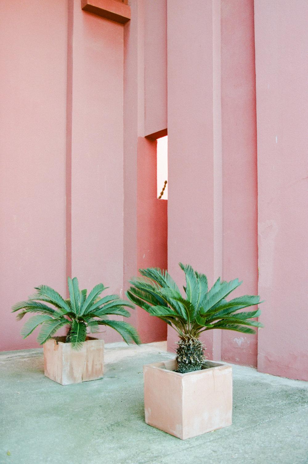 Palmiers, Muralla Roja