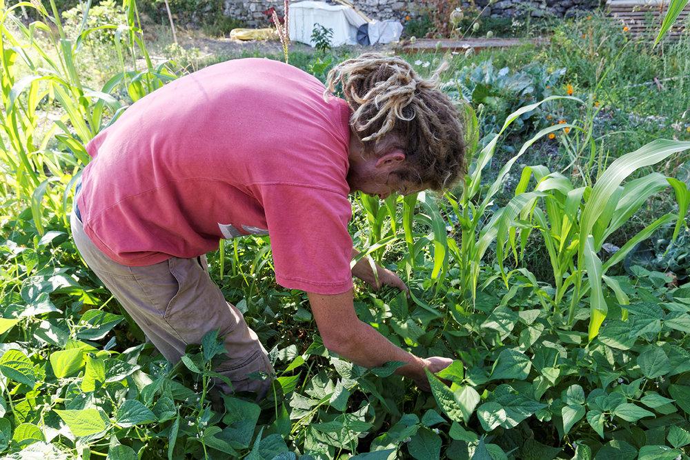 William au jardin