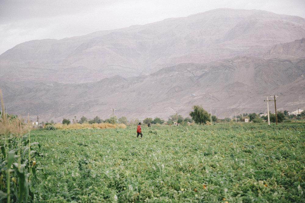 L'agriculture autour du lac, mer Morte