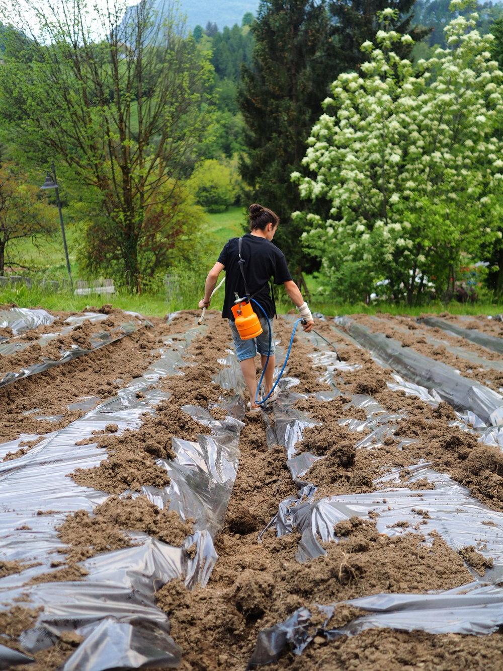 Eliseo prépare un champ, Italie