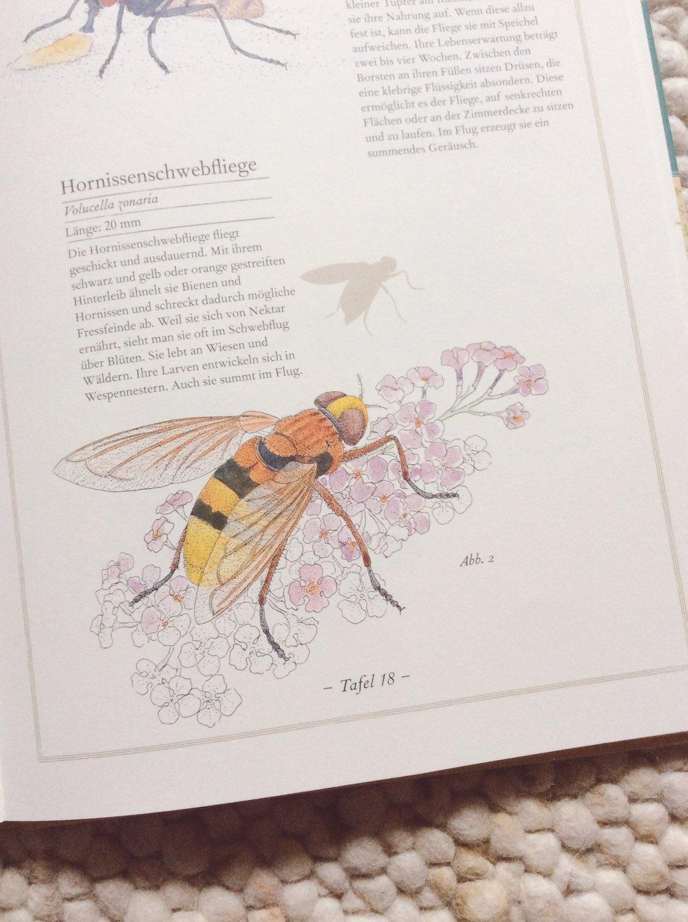 lesestoffmitdaumenkino-fliege-falter-honigbiene-hornissenschwebfliege