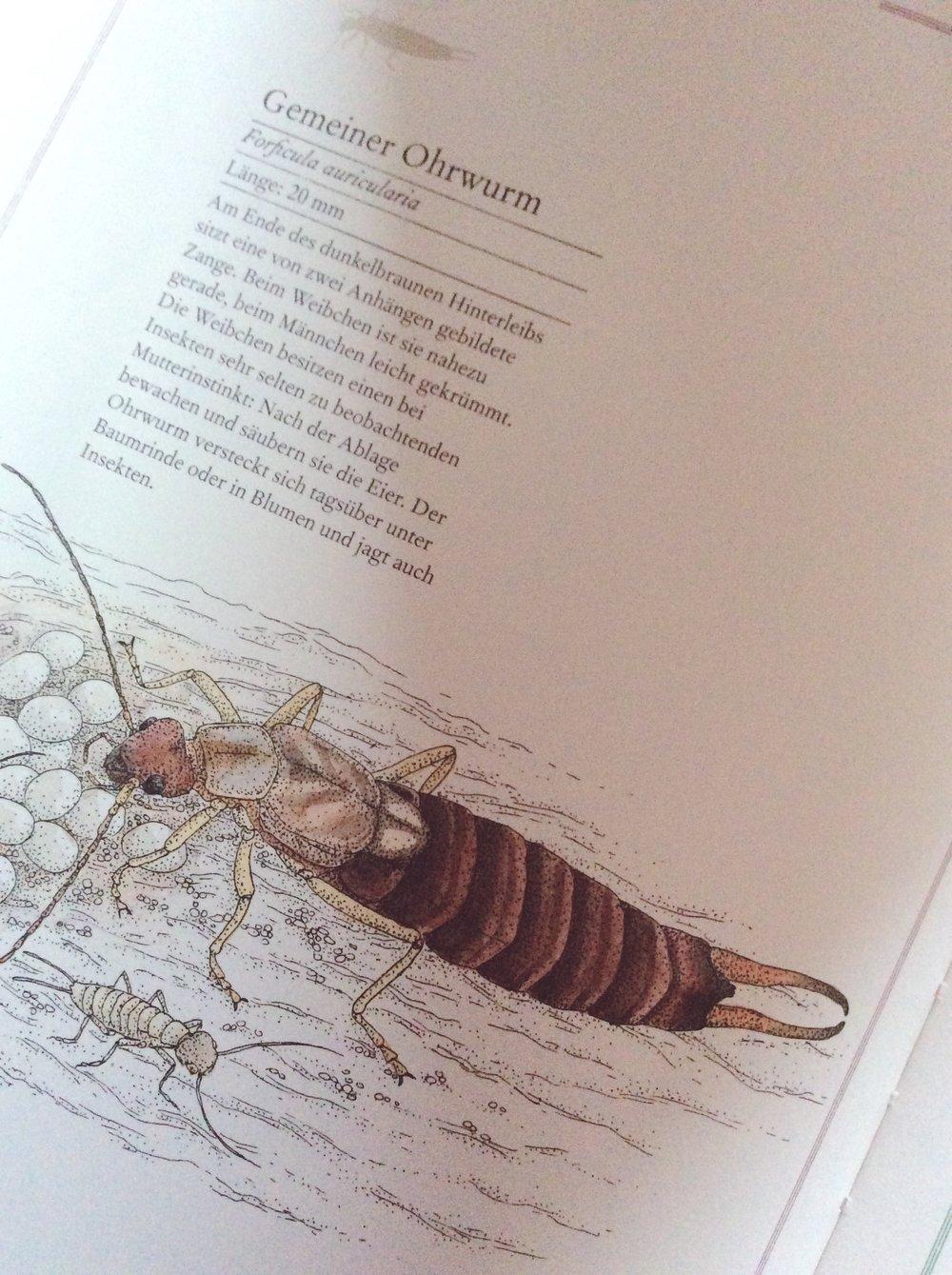 lesestoffmitdaumenkino-fliege-falter-honigbiene-ohrwurm