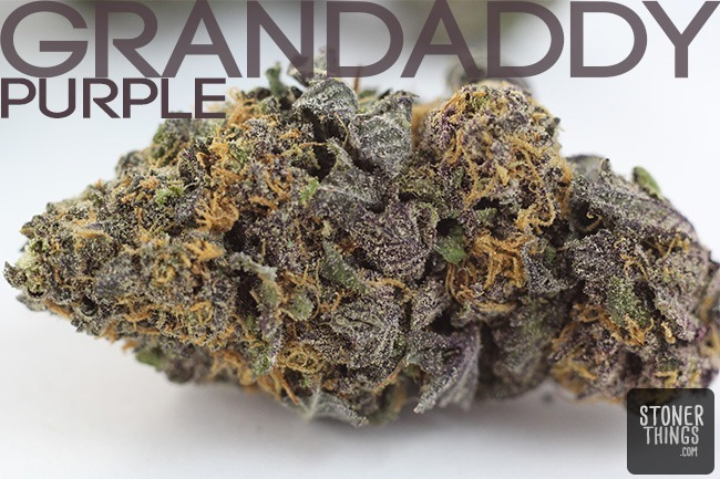 Grandaddy-Purple.jpg