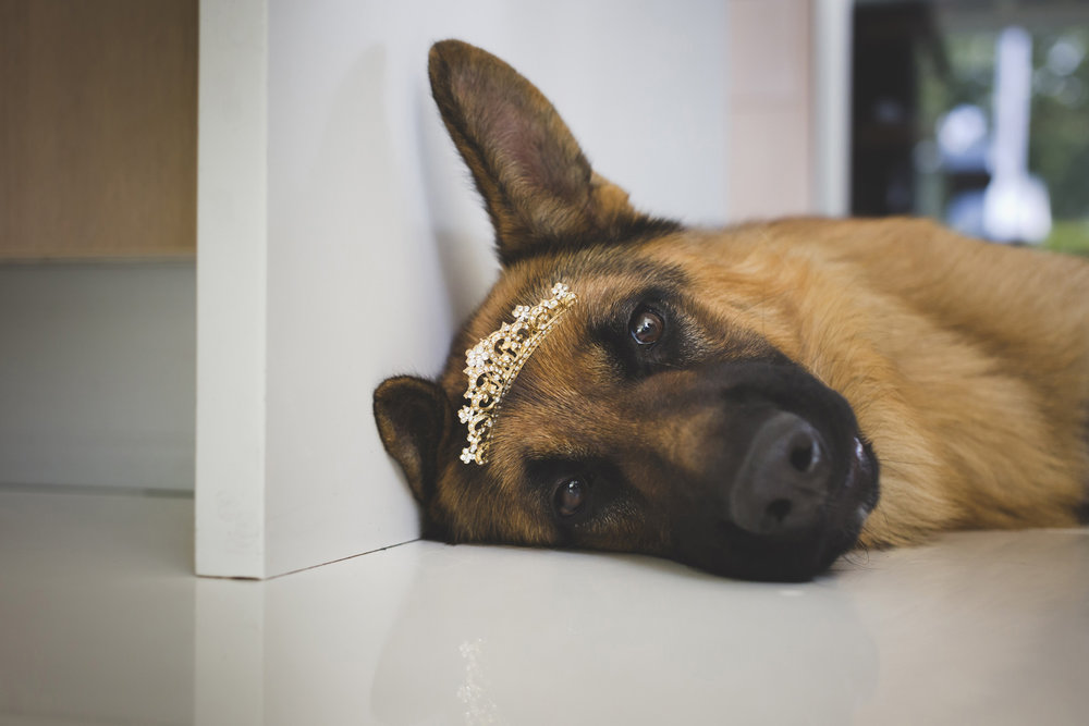 Funny Wedding photo dog by wedding photographer Valdur Rosenvald