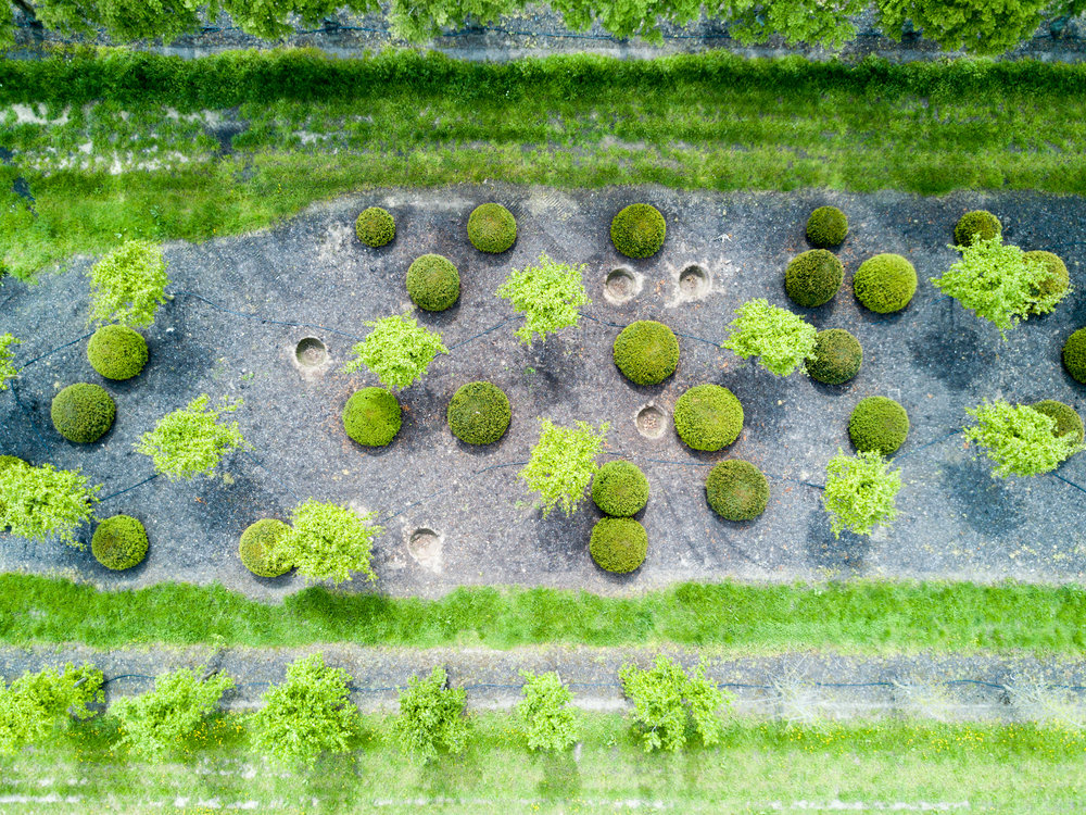 arty-pictures-drone.jpg