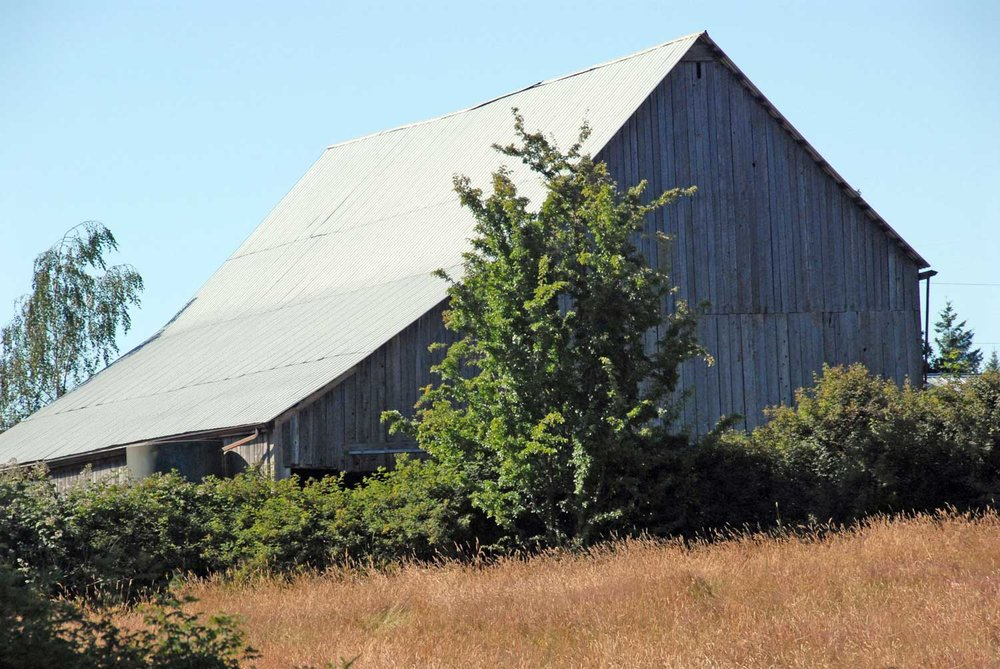 Traditional barns are a regular feature of the Cowichan Valley agricultural landscape and the concept for the visitor centre's design.