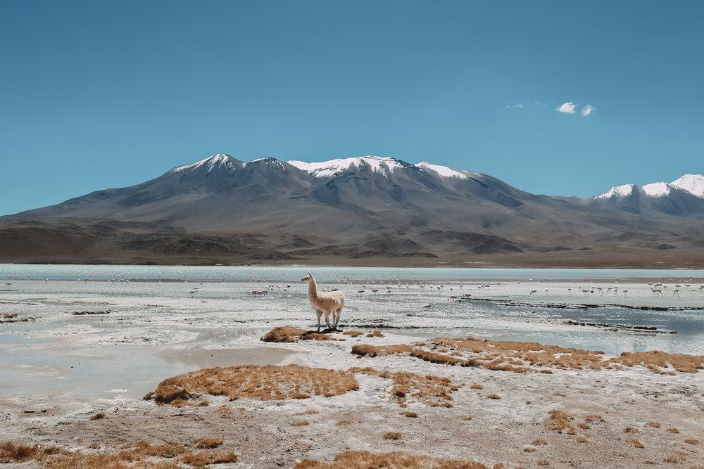 decouvrir-la-region-de-potosi-the-cheerfulist-bolivie.jpg