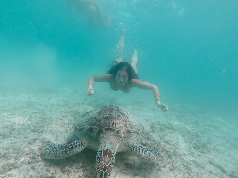 nager-avec-les-tortues-port-barton-philippines