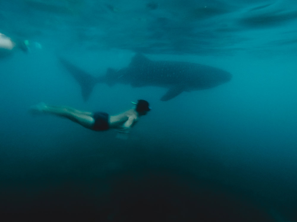 nager-avec-les-requins-baleines-bohol-philippines-julien-boye.jpg