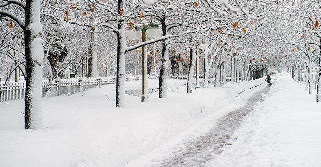 #winter in Ottawa is wonderful . . . . #ottawa #myottawa #explorecanada #yow #beautifulview #snow