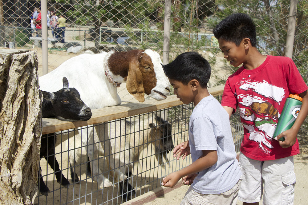 Spring Fling at CaLM - April 13-20th, 9am - 4pmWe are always proud to support community activities that involve the kiddos + animals! Join the California Living Museum during the most beautiful time of the year and learn about some incredible animals. During Spring Fling week animal encounter presentations are scheduled four times a day, docents stroll the ground with Ambassador Animals and specimen carts, the train will run each day from 11am - 3pm, and Hunsaker Brothers food services will be onsite. Let's be proud of the climate and ecosystems that make up our land and support an organization that cares for the wounded and endangered.Photo credit: The Runner
