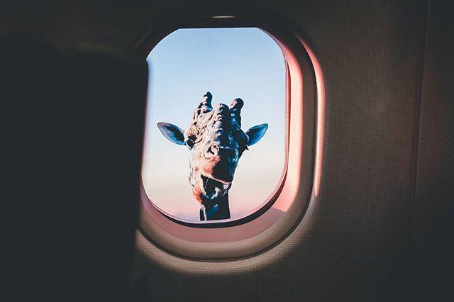 You start seeing things on some long flights... . . . #photoshop #art #photography #photo #photographer #photooftheday #artist #design #graphicdesign #digitalart #like #illustration #love #instagood #instagram #drawing #illustrator #artwork #nature #naturephotography #canon #picoftheday #photoshopcc #sketch #digitalwork #adobe #beautiful #designer #bhfyp #photoshopart