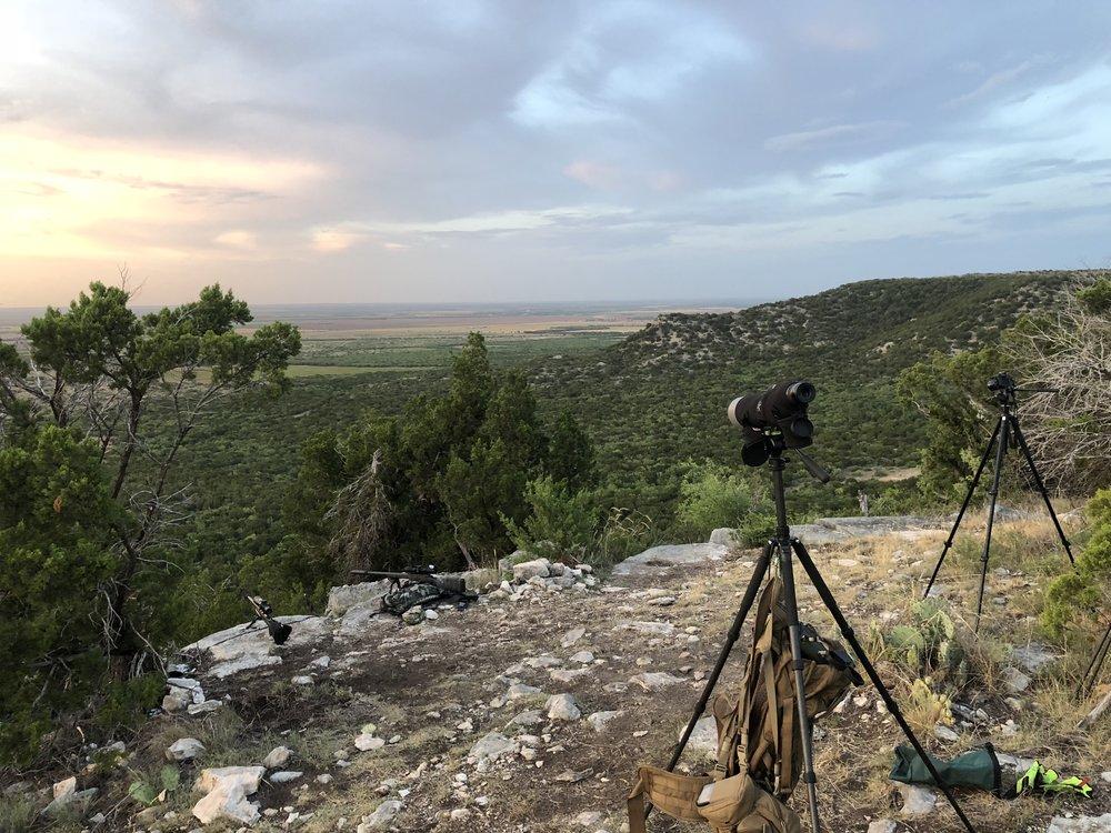 Long Range Hog Hunt -