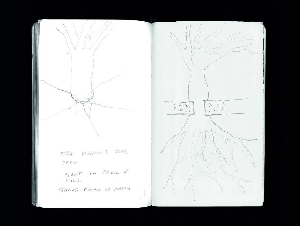 Tree Crack