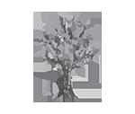 sarah-brose-brand-icon_medium-gray-250px.png
