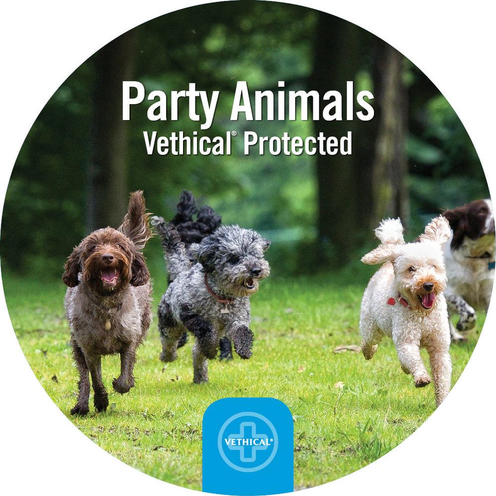 Party-Animal.jpg