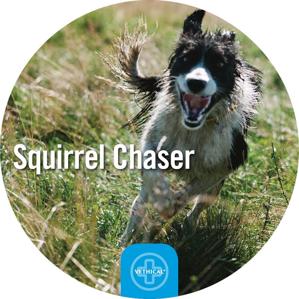 Squirrel-Chaser.jpg