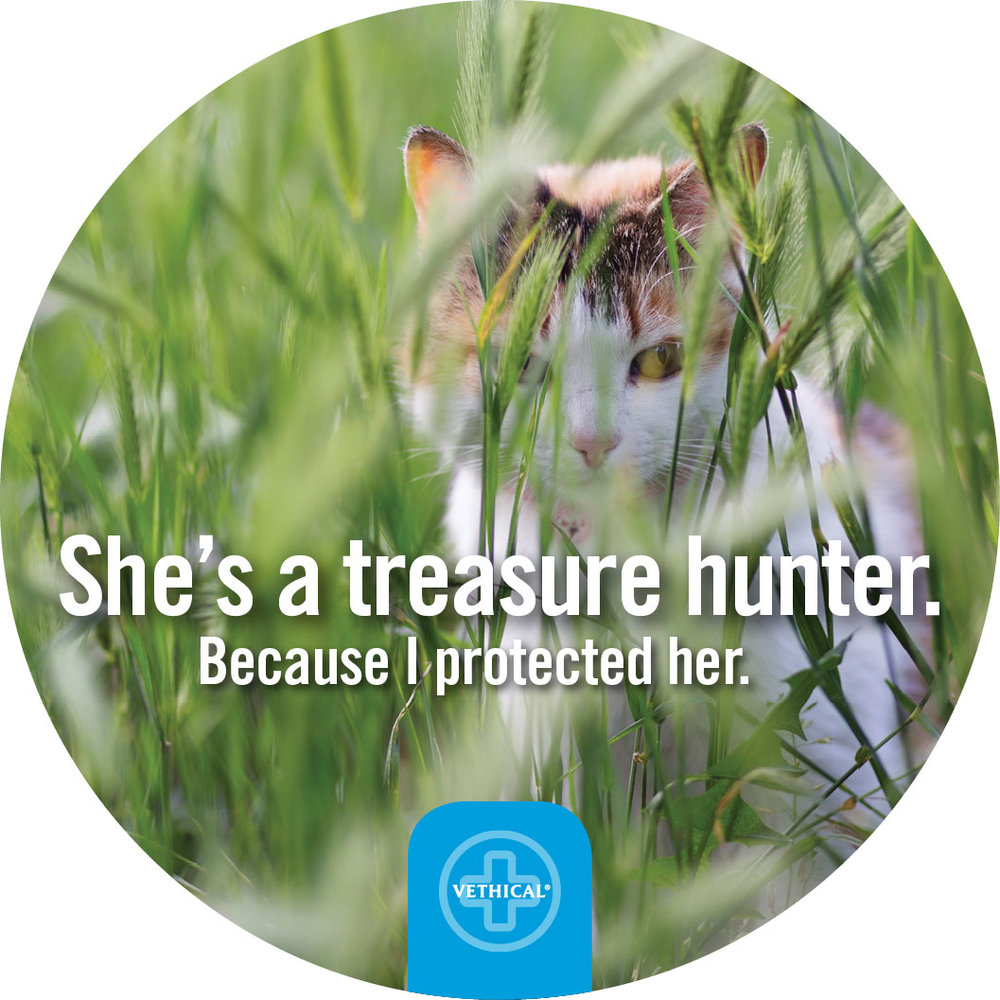 Treasure-Hunter.jpg