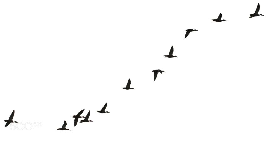 flock of birds.JPG
