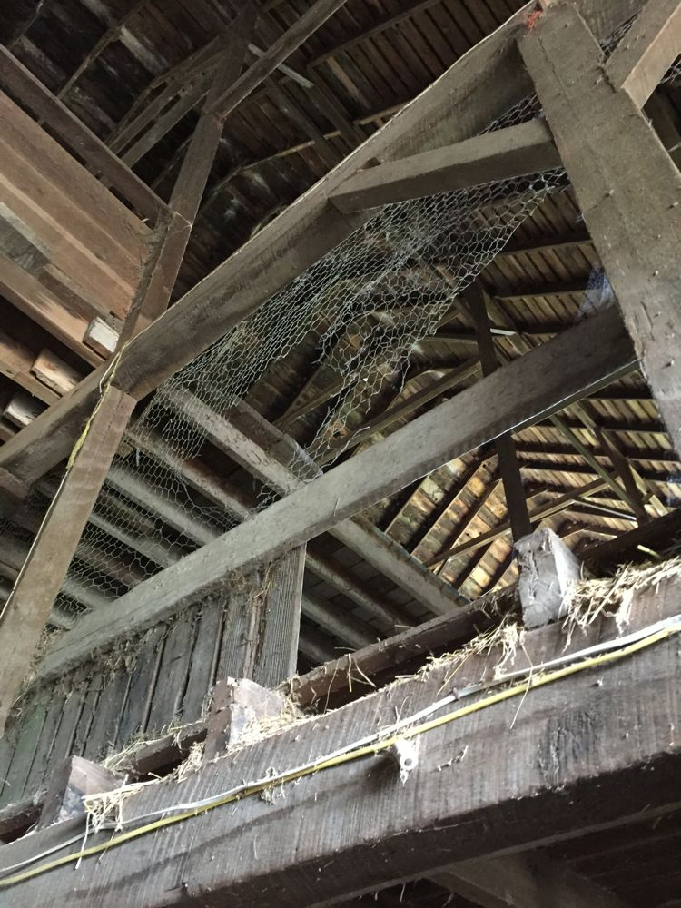 The roof of the old barn